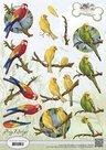 CD10539 Knipvel Amy Design Animal Medley Tropical Parrots