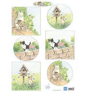 IT608 -Knipvel Tiny's kittens